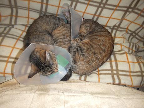手術から帰ってきてお疲れの2匹2