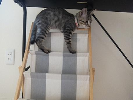 ダイヤ 階段のぼる