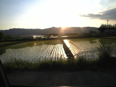田んぼと夕景