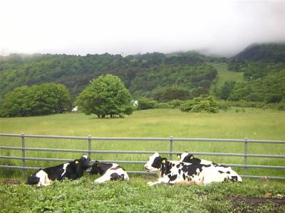 牛さん@猪苗代町営磐梯山牧場