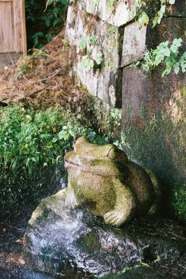 蛙@土津神社