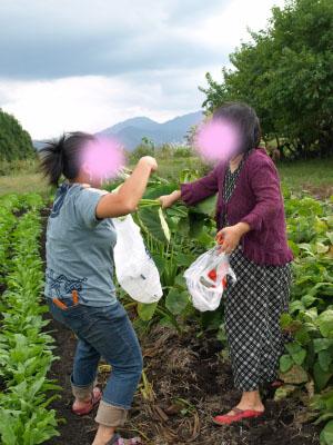 園芸部(サトイモ収穫)