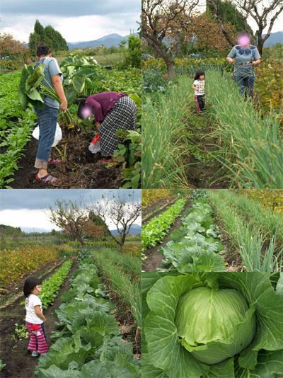 園芸部(野菜の収穫)