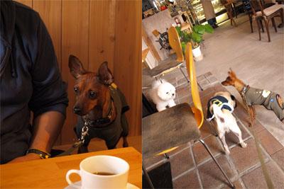 アクア@Dais Cafe