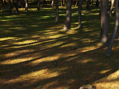 昭和の森(天鏡台)