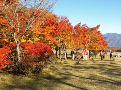 昭和の森(天鏡台)の紅葉