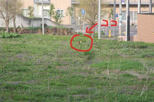 2011_0524_03.jpg