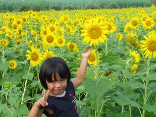 2012.7ひまわり畑2
