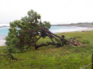 2012台風15号2