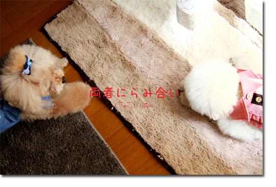 10_20100915104821.jpg