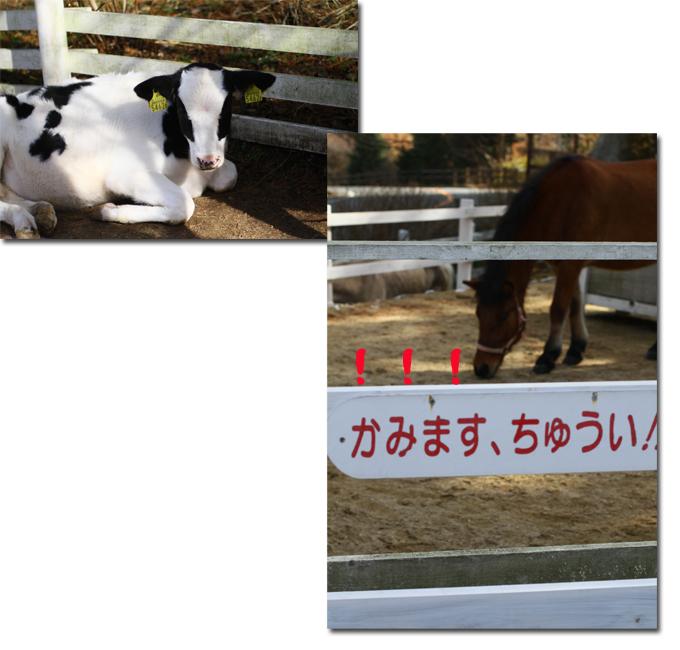 10_20101210181849.jpg