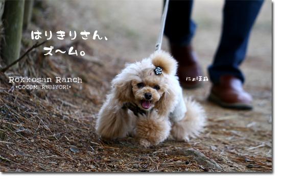 5_20101210174641.jpg