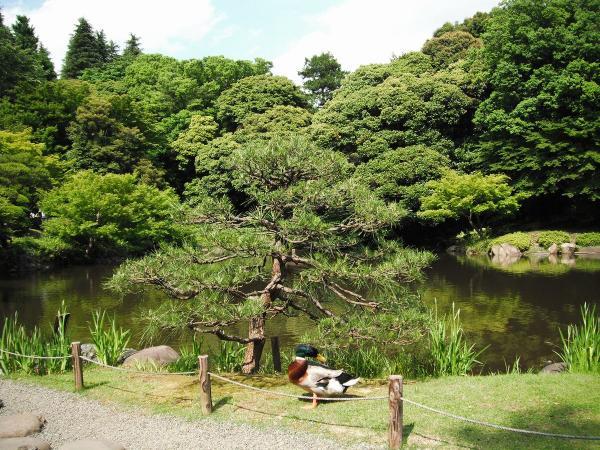 日本庭園4〔フリー写真〕