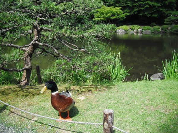 日本庭園5〔フリー写真〕