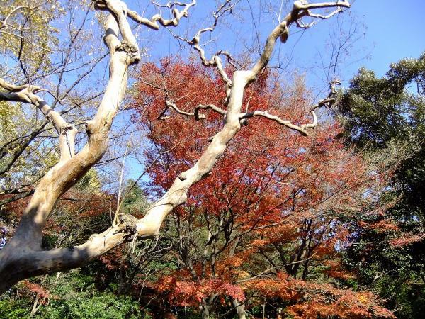 日本庭園8〔フリー写真〕