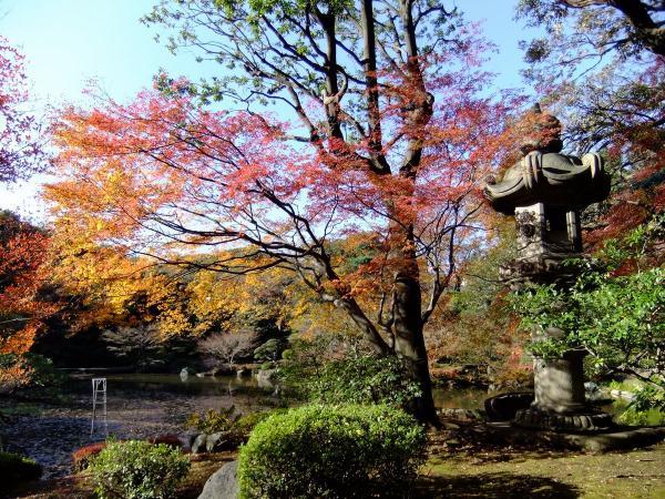 日本庭園10〔フリー写真〕