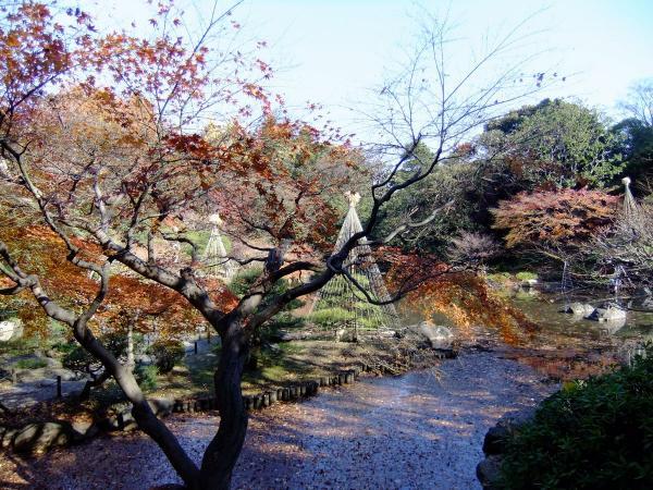日本庭園11〔フリー写真〕