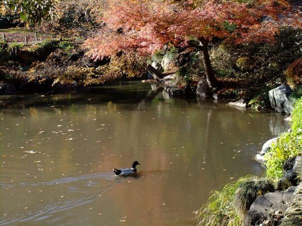 日本庭園17〔フリー写真〕