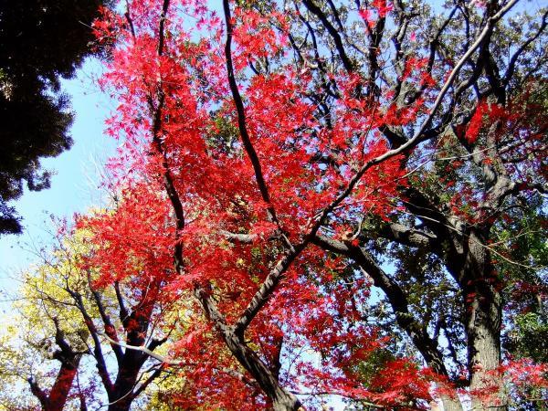 日本庭園18〔フリー写真〕