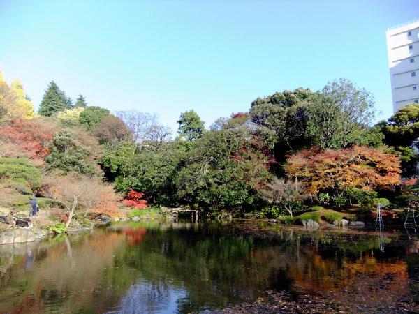 日本庭園19〔フリー写真〕