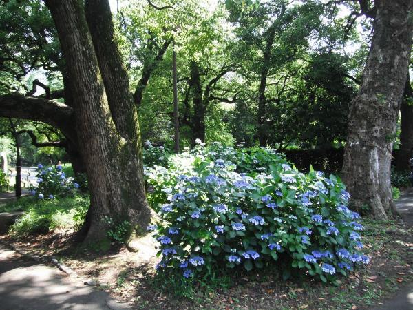 日比谷公園 心字池4〔フリー写真〕
