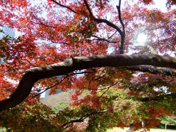 浜離宮庭園29〔フリー写真〕
