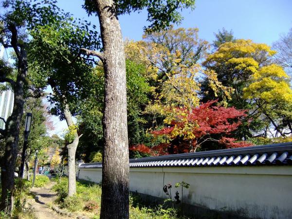 小石川後楽園1〔フリー写真〕