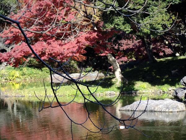 小石川後楽園3〔フリー写真〕