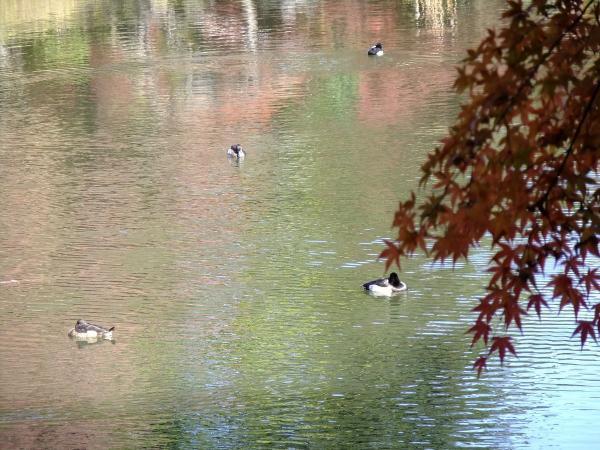 小石川後楽園4〔フリー写真〕