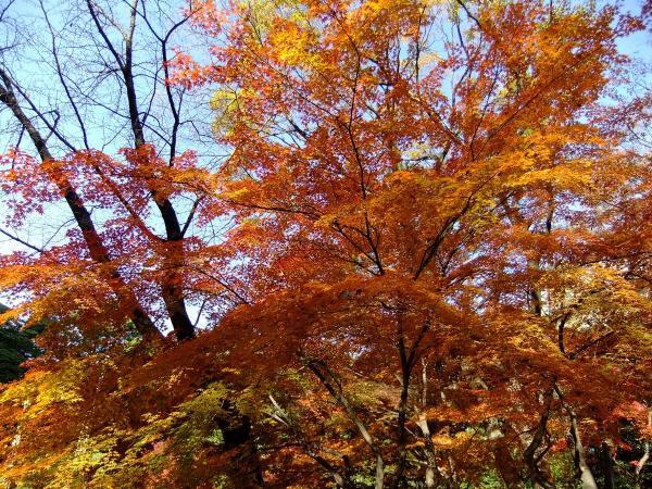 小石川後楽園10〔フリー写真〕
