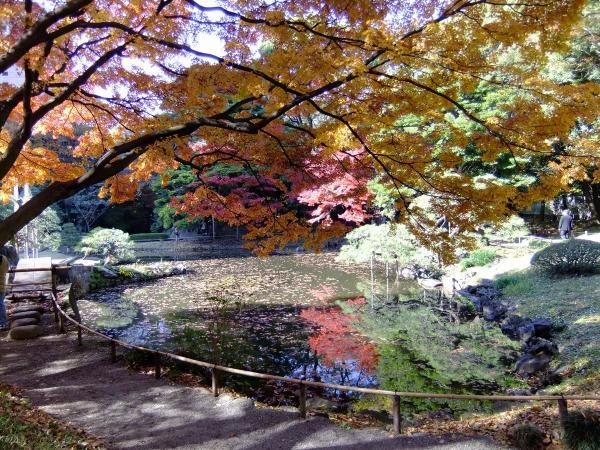 小石川後楽園11〔フリー写真〕