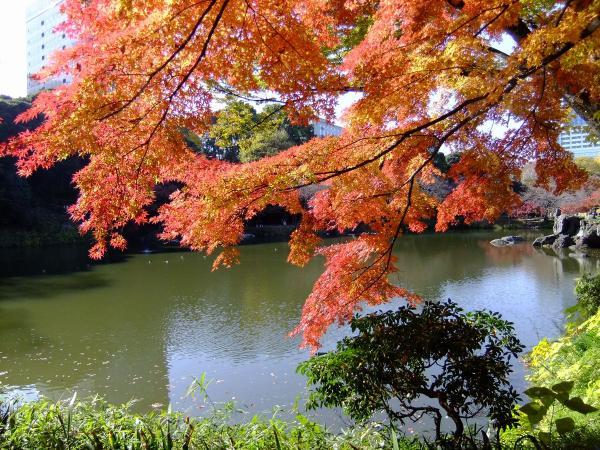 小石川後楽園15〔フリー写真〕