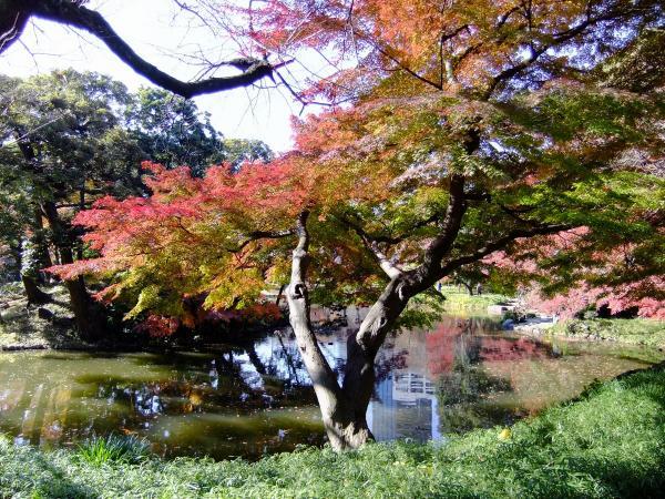 小石川後楽園16〔フリー写真〕