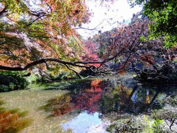 小石川後楽園17〔フリー写真〕