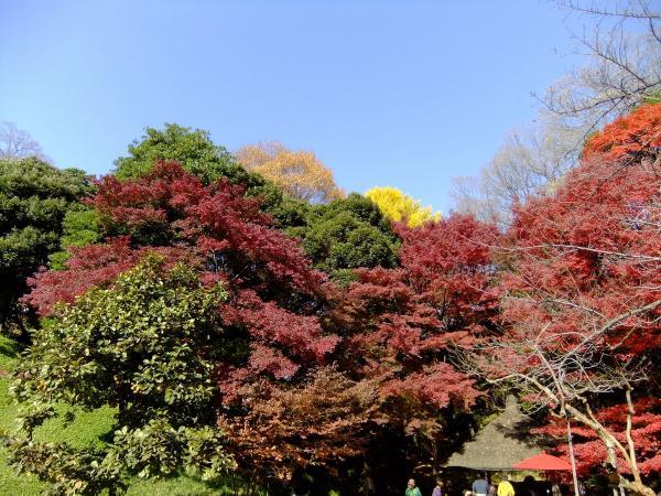 小石川後楽園22〔フリー写真〕