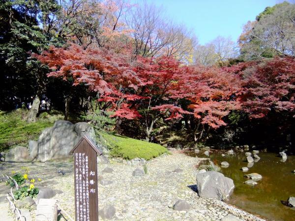 小石川後楽園25〔フリー写真〕