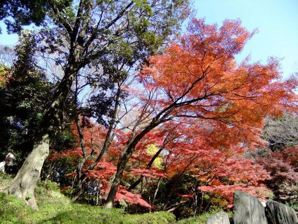 小石川後楽園26〔フリー写真〕