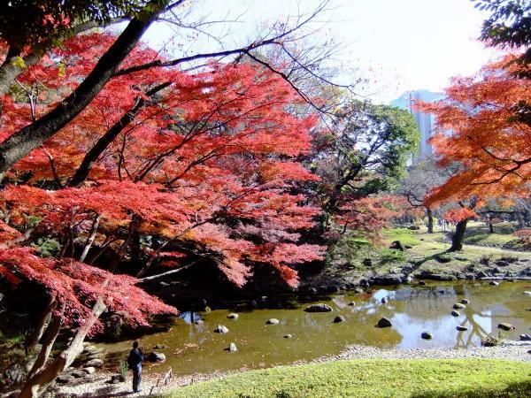 小石川後楽園28〔フリー写真〕