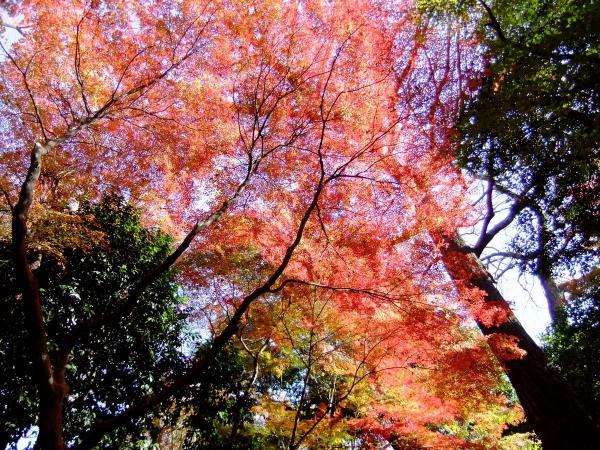 小石川後楽園30〔フリー写真〕