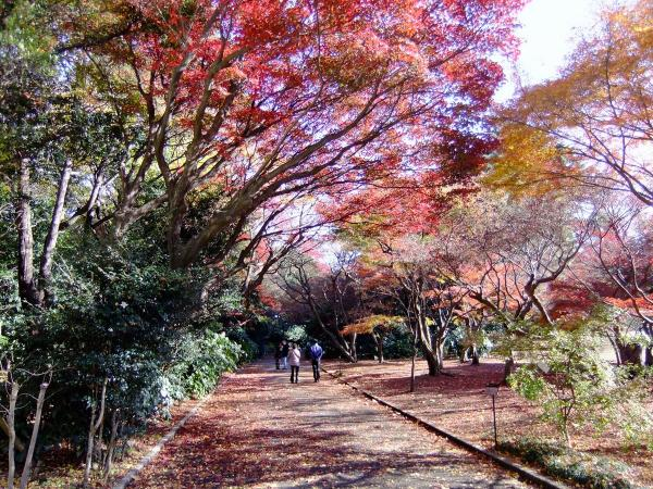 新宿御苑24〔フリー写真〕