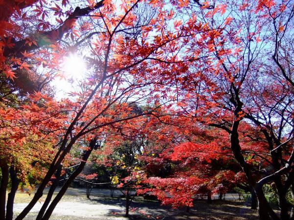 新宿御苑26〔フリー写真〕