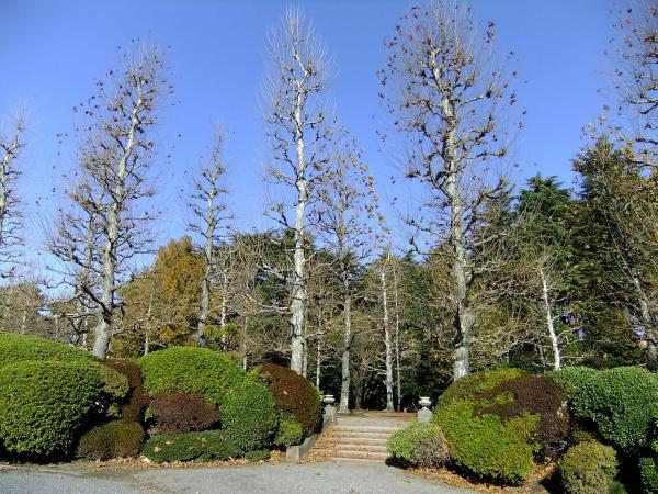 新宿御苑32〔フリー写真〕