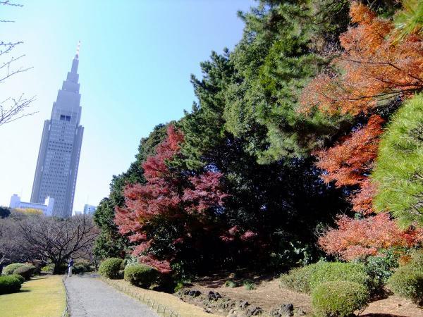 新宿御苑16〔フリー写真〕