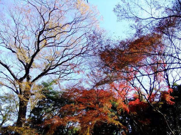 新宿御苑18〔フリー写真〕