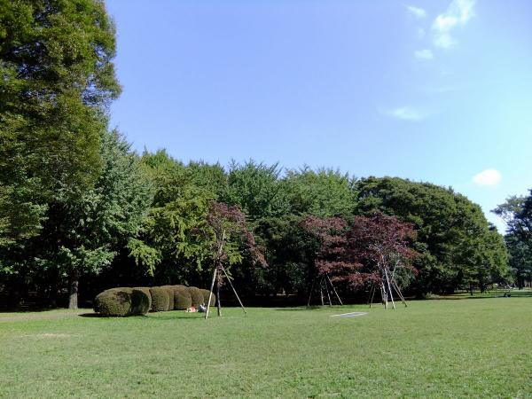 代々木公園2〔フリー写真〕