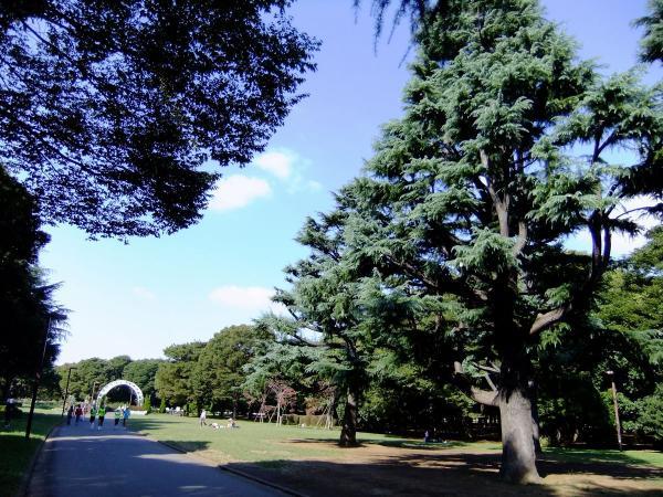 代々木公園3〔フリー写真〕