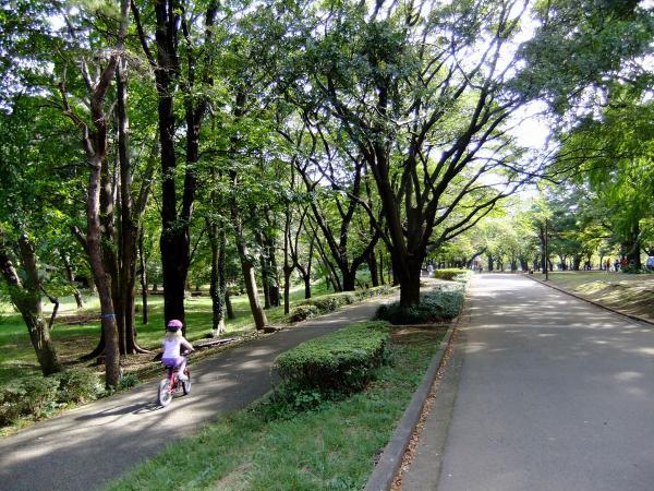 代々木公園5〔フリー写真〕
