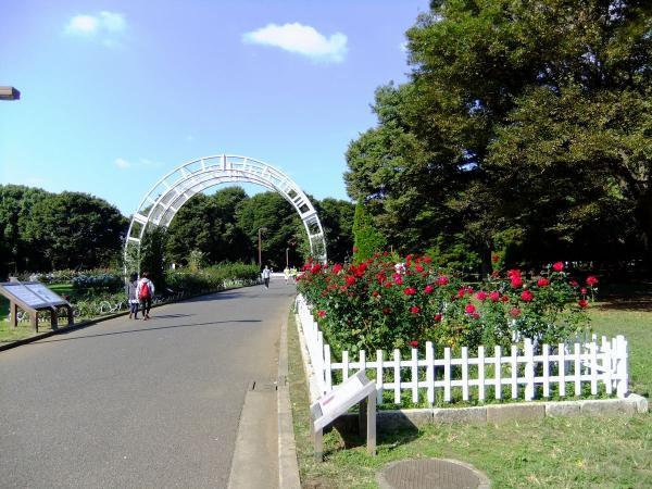 代々木公園 バラ園1〔フリー写真〕