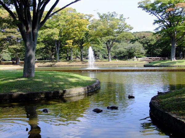 代々木公園 噴水広場2〔フリー写真〕