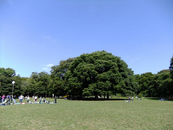 代々木公園10〔フリー写真〕